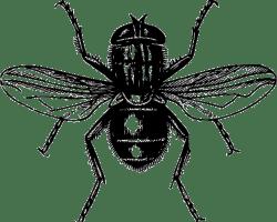 Insektenschutz verhindert nervige Fliegen im Haus